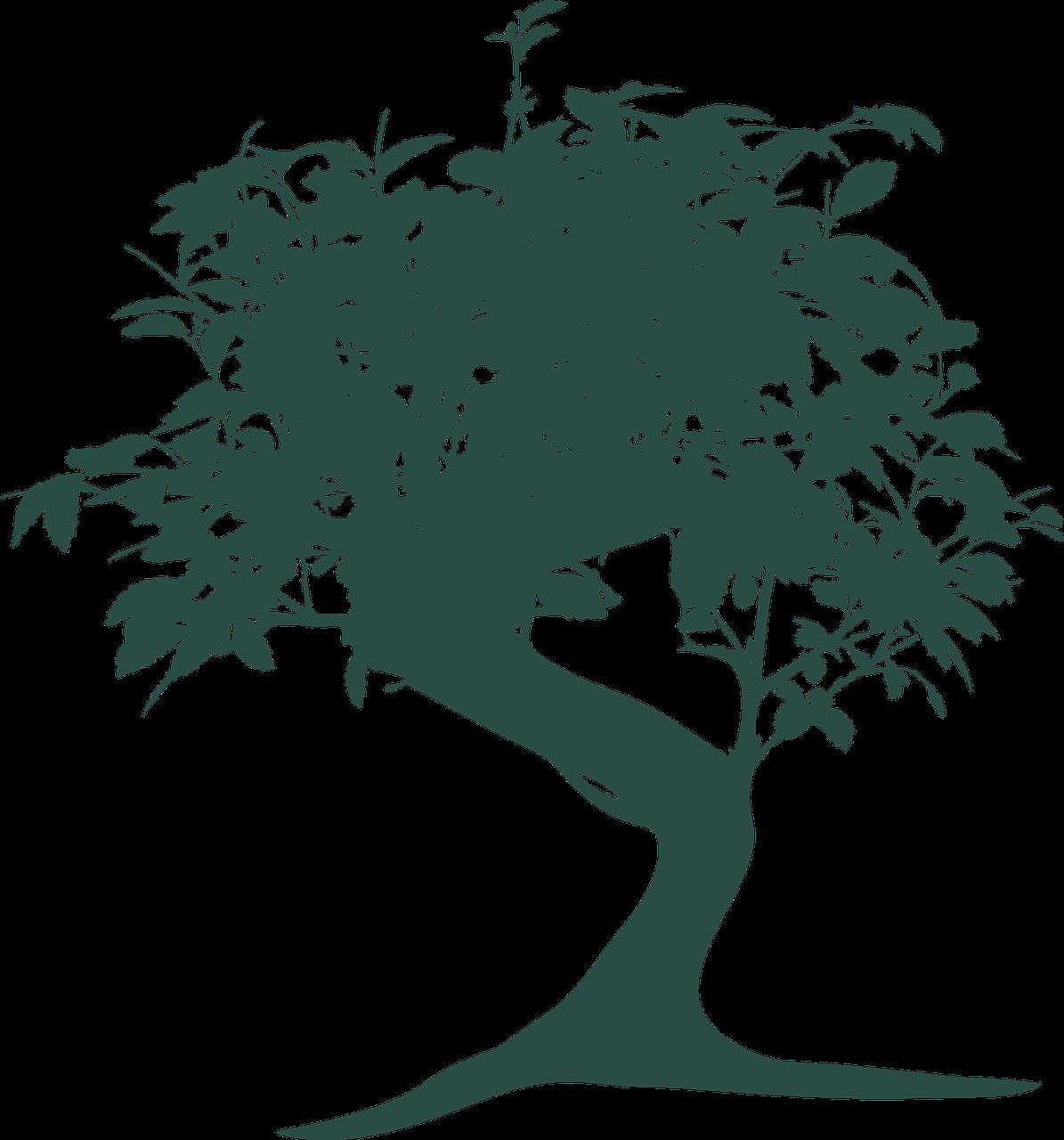 bonsai, tree, nature